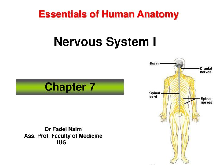 Essentials of human anatomy nervous system i