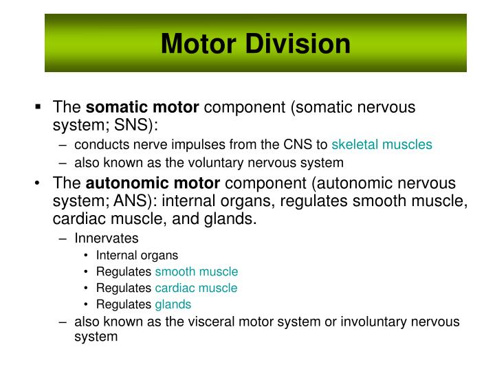 Motor Division