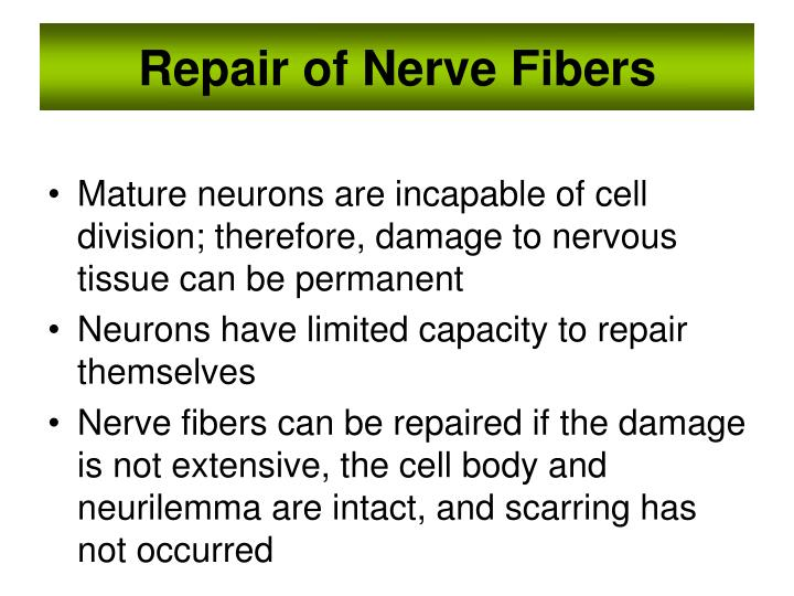 Repair of Nerve Fibers