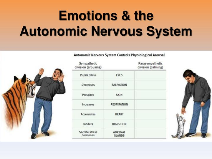 Emotions & the                         Autonomic Nervous System
