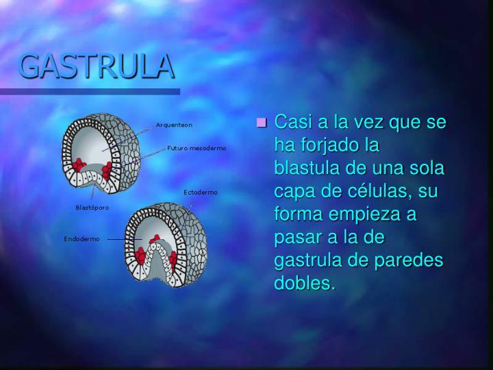 GASTRULA