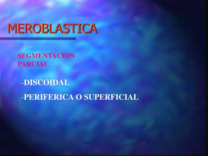 MEROBLASTICA