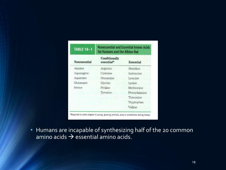 Humans are incapable of synthesizing half of the 20 common amino acids