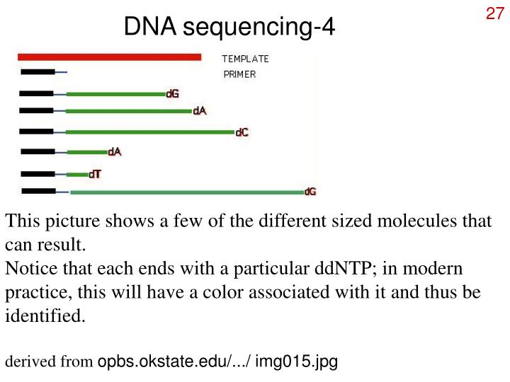 DNA sequencing-4