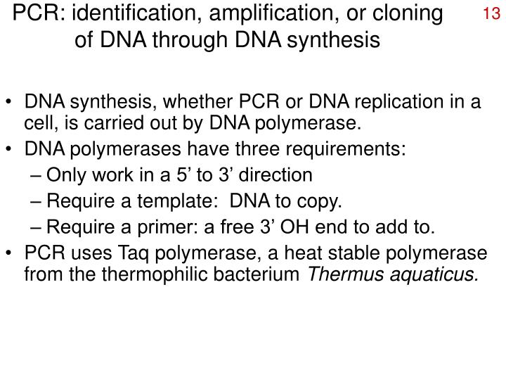PCR: identification, amplification, or cloning of DNA through DNA synthesis