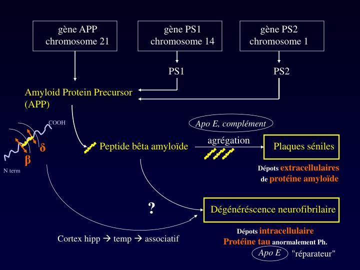 gène APP