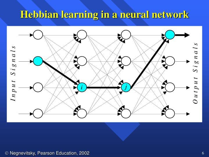 Hebbian learning in a neural network