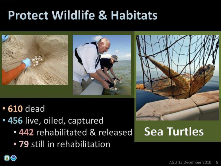 Protect Wildlife & Habitats