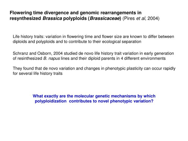 Flowering time divergence and genomic rearrangements in resynthesized