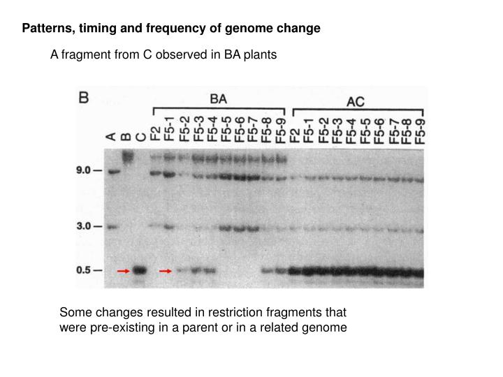 Patterns, timing and frequency of genome change