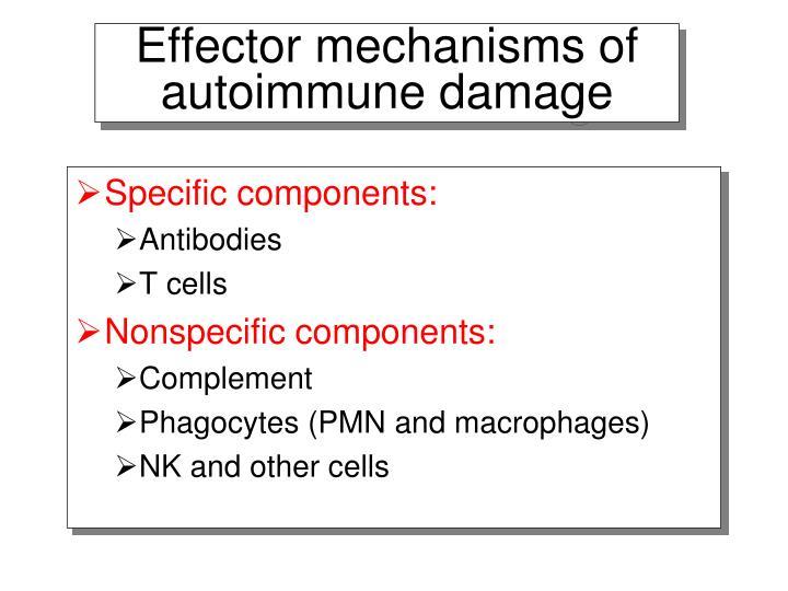 Effector mechanisms of autoimmune damage
