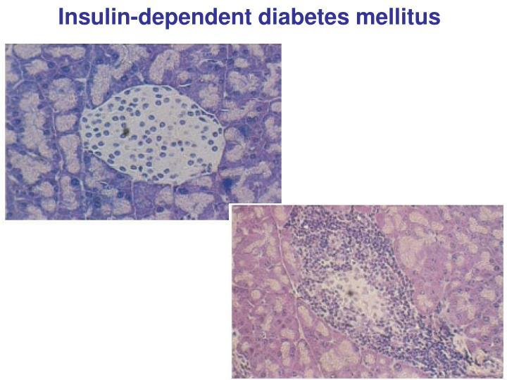 Insulin-dependent diabetes mellitus