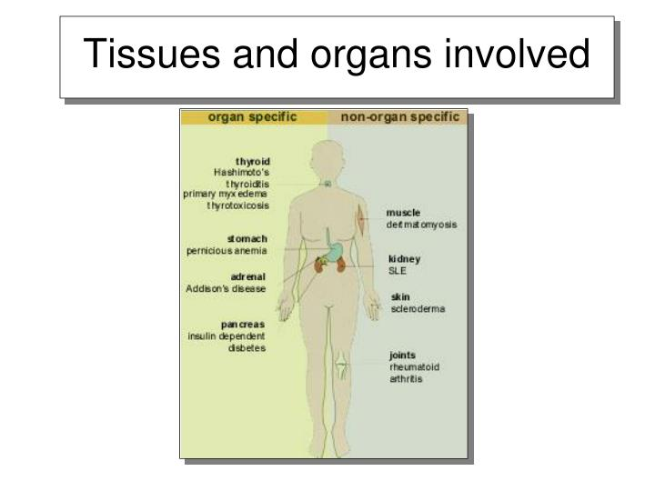 Tissues and organs involved