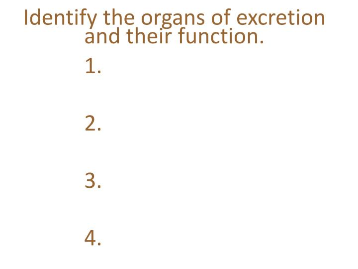 Identify the organs of excretion and their function.