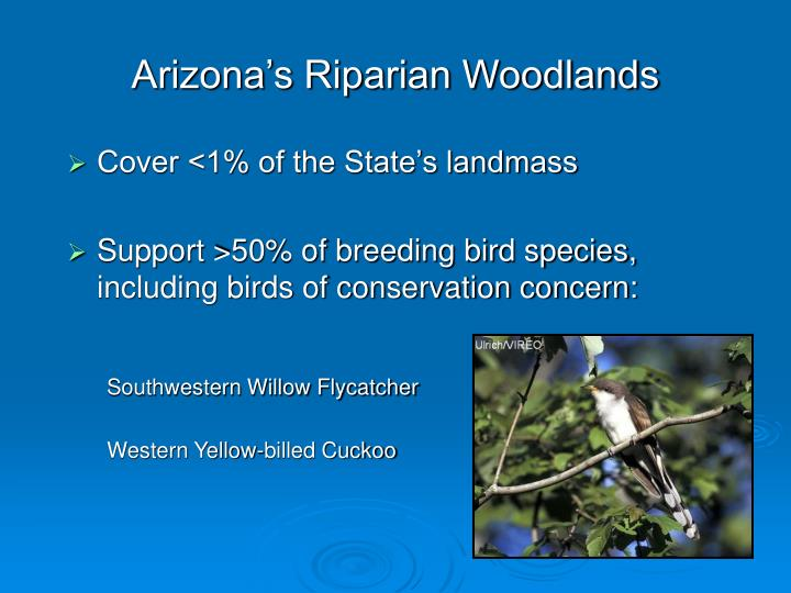 Arizona's Riparian Woodlands