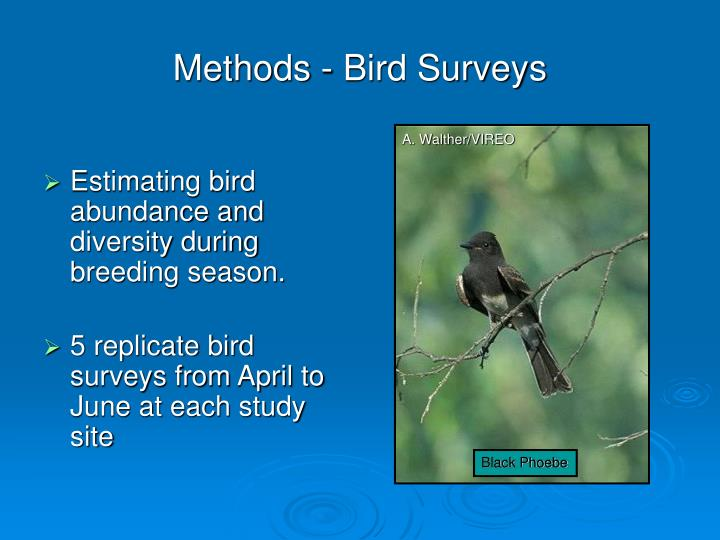 Methods - Bird Surveys