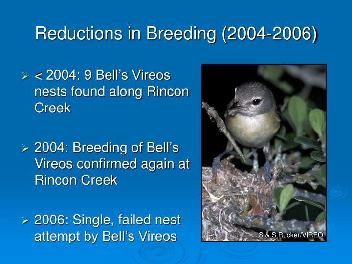 Reductions in Breeding (2004-2006)