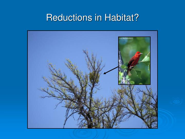 Reductions in Habitat?