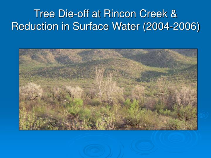 Tree Die-off at Rincon Creek & Reduction in Surface Water (2004-2006)