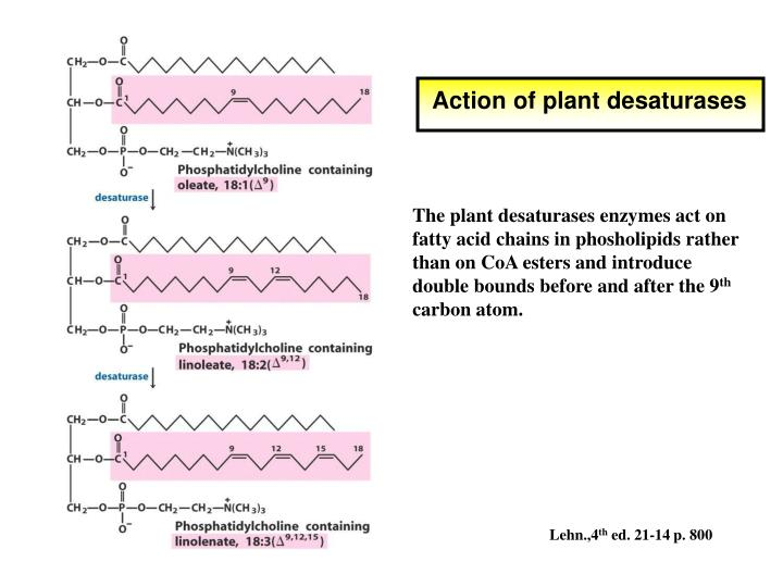 Action of plant desaturases