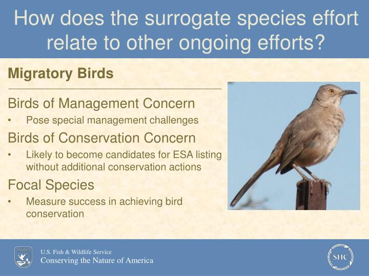 How does the surrogate species effort relate to other ongoing efforts