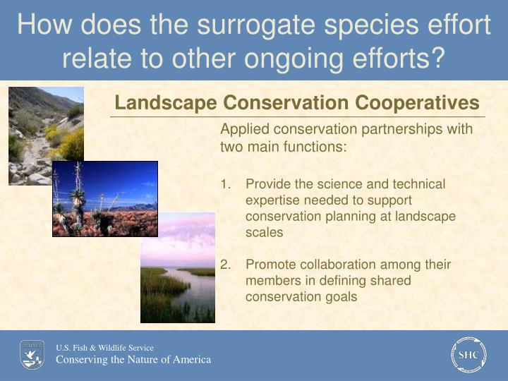 How does the surrogate species effort relate to other ongoing efforts?