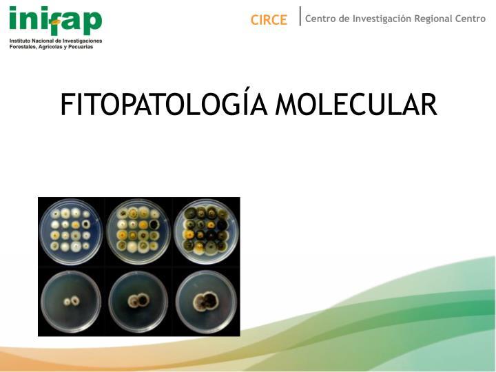 FITOPATOLOGÍA MOLECULAR