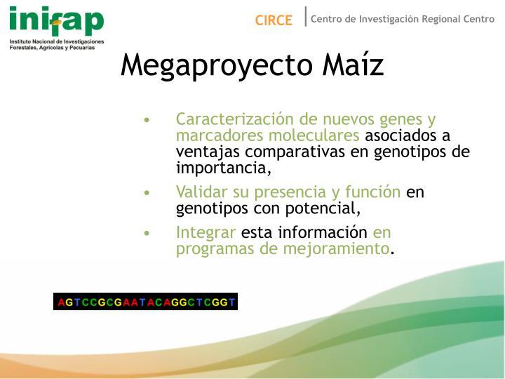 Megaproyecto Maíz