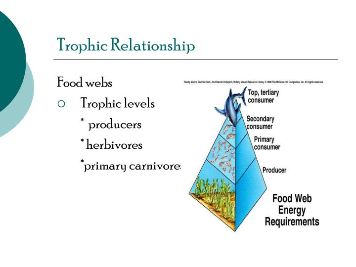 Trophic Relationship