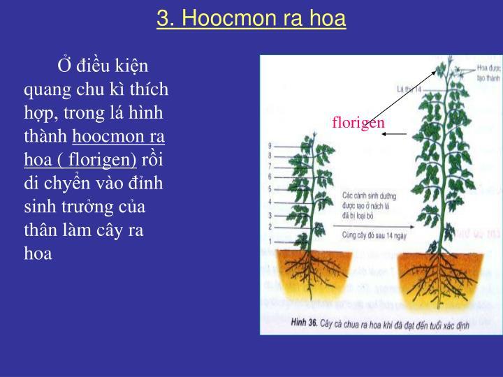3. Hoocmon ra hoa