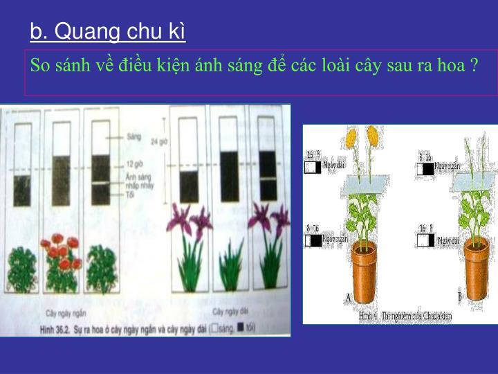 b. Quang chu kì
