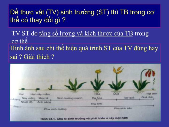 Để thực vật (TV) sinh trưởng (ST) thì TB trong cơ thể có thay đổi gì ?