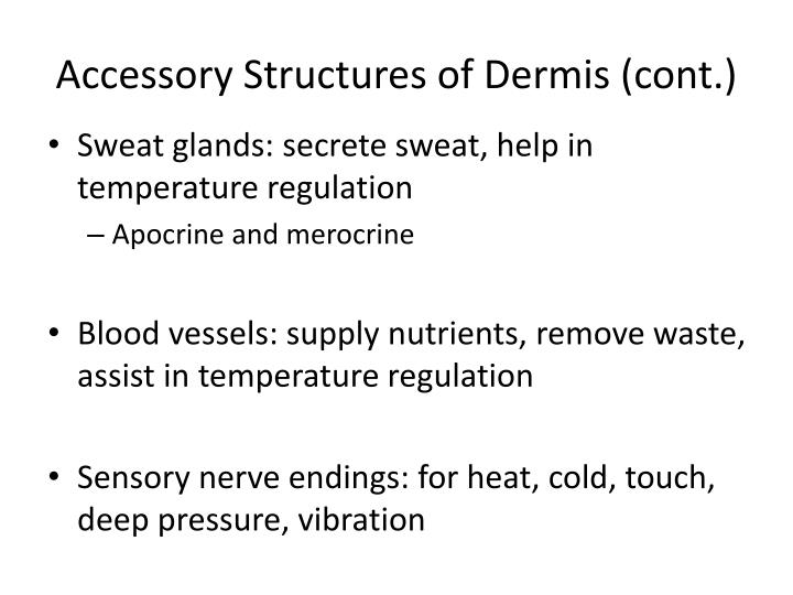 Accessory Structures of Dermis (cont.)