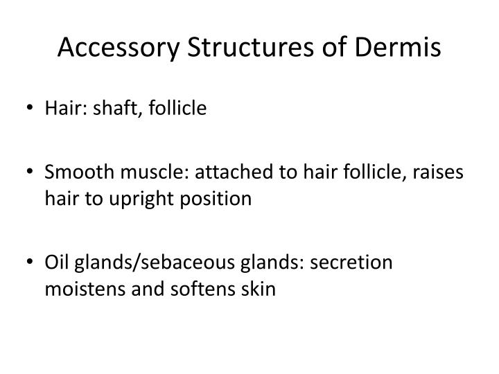 Accessory Structures of Dermis