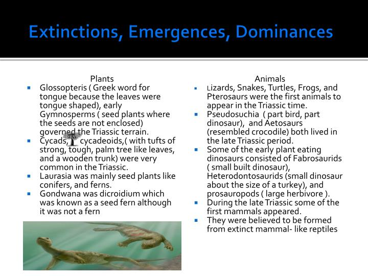 Extinctions, Emergences, Dominances