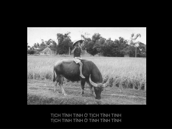 TỊCH TÌNH TINH Ớ TỊCH TÌNH TINH