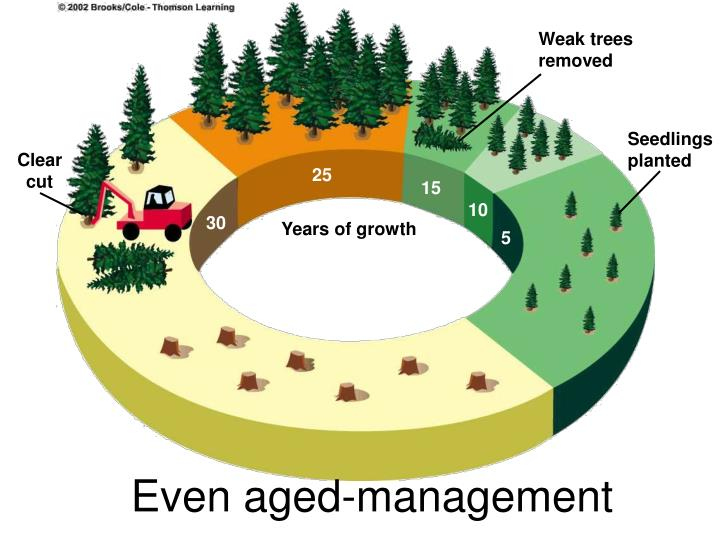 Even aged-management