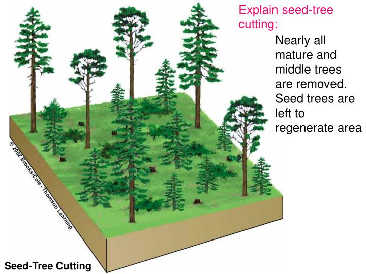 Explain seed-tree cutting: