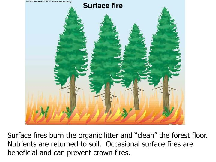 Surface fire