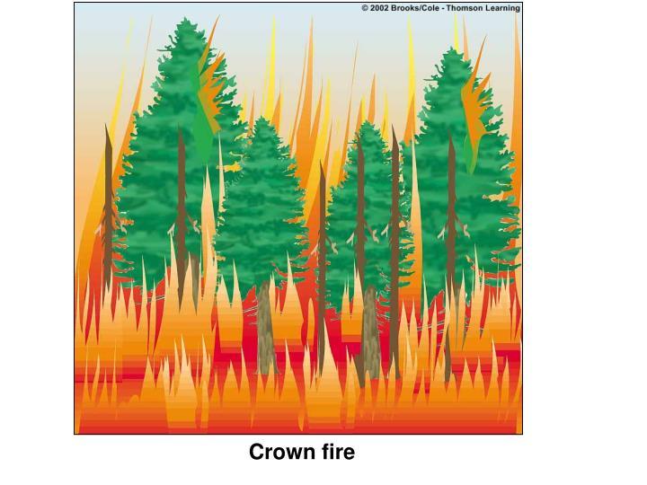 Crown fire