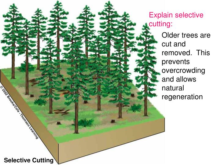 Explain selective cutting: