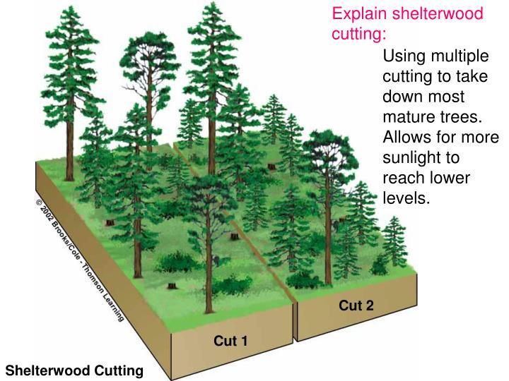 Explain shelterwood cutting:
