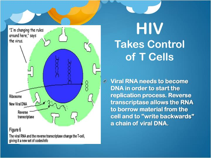 "Viral RNA needs to become DNA in order to start the replication process. Reverse transcriptase allows the RNA to borrow material from the cell and to ""write backwards"" a chain of viral DNA."