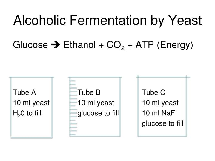 Alcoholic Fermentation by Yeast