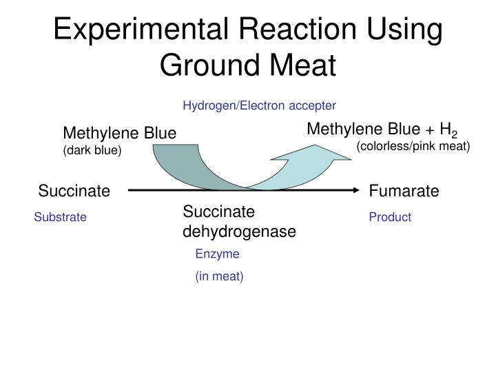 Experimental Reaction Using Ground Meat
