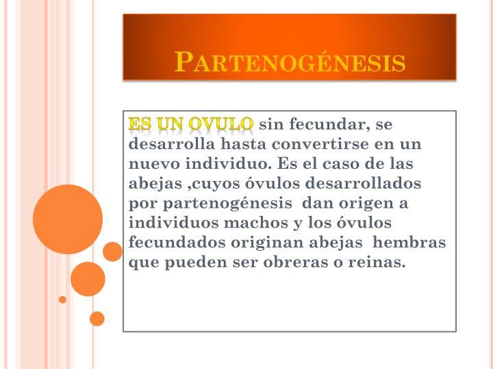 Partenogénesis