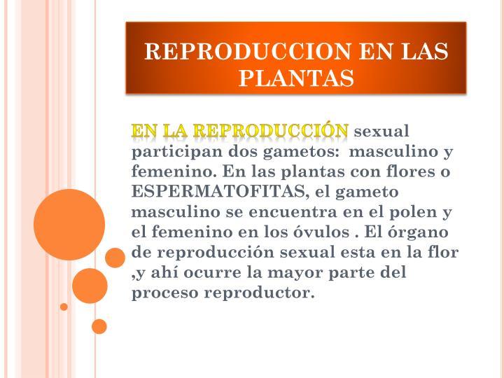 REPRODUCCION EN LAS PLANTAS