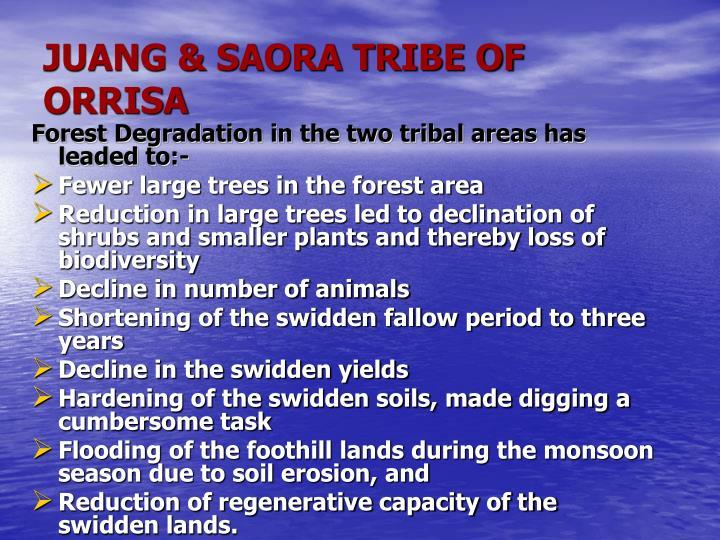 JUANG & SAORA TRIBE OF ORRISA