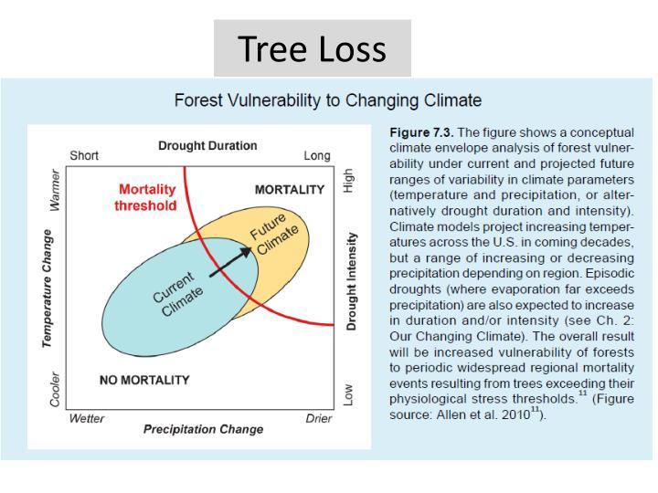 Tree Loss