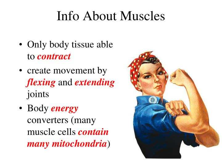 Info About Muscles